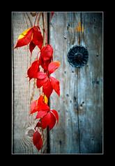 Autumn Leaves (Walter Quirtmair) Tags: autumn film leaves austria flora swq takenbywalter kaprun eos300