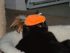 The REAL carrot top (tygress_janie) Tags: cats cute animal animals topv111 cat furry kitten feline chat fuzzy kitty kittens gatos gato kitties gata felines katze gatto animale cutecat cutecats tier kaz katt ktzchen ket gatas cutekitten cutekittens mo maxset