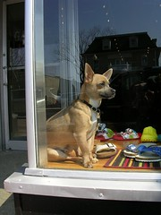 Shoe Store Dog (Valerie Craig (Val Ann)) Tags: 2005 dog march newjersey nj redbank vf valann valfbjuly valann422