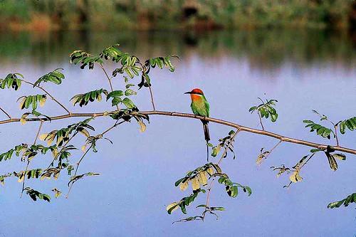 Malawi: Bird by babasteve.