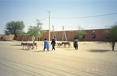 Timbuktu Herders (upyernoz) Tags: timbuktu mali tombouctou
