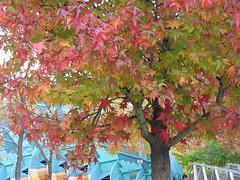 Arbre en automne  La Villette (jalb) Tags: paris france tree digital canon automn urbannature g2 villette parcdelavillette 75019 interestingness258 i500