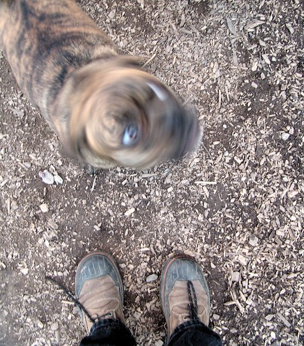 standing there dog twisted head par zen