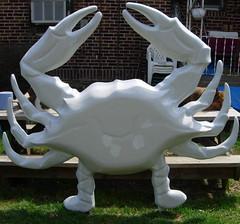 crab front (dogfaceboy) Tags: crab baltimore acrabslife crabtown