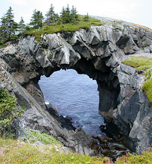 Berry Head (Rexton) Tags: canada tree water rock tag3 1025fav 510fav newfoundland giant coast berry tag2 arch tag1 picturesthroughholes head hike southern trail shore nl avalon berryhead eastcoasttrail fv05 aartgallery