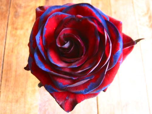 kenny roger, buy me a rose