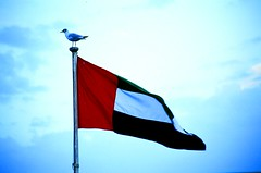 UAE flag with bird on post