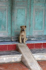 Little Guard Dog (Gibtach) Tags: phulang vietnam dog blue red color colour topv111 door steps ramp travel cute personalfavorite 36exp gibtach 300d canon itsongselection1 itsongcanoneos300d ultimatesurvivor