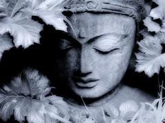 Blue Buddha (hurleygurley) Tags: blue b sculpture art topf25 public interestingness buddha explore duotone rgb hg hurleygurley topf20 utatablue etcet elisabethfeldman faveset