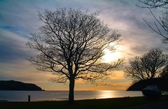 From the Braehead Cromarty (ccgd) Tags: tree sutor sunrise cromarty highlands scotland
