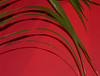 LEAVES ON A RED WALL (Graniers) Tags: colour leaves tag3 taggedout tag2 tag1 saturation kiss2 interestingness93 kiss3 kiss1 kiss4 kiss5 nickjames mushroomworks