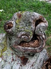 Tree Smile (deu49097) Tags: tree face