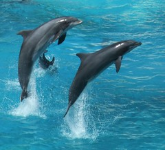 dolphins by talkrhubarb, on Flickr