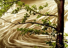 Chocolate stirred by waterfall (Ray Byrne) Tags: longexposure tree water wow river chocolate north alnwick northumberland swirl northeast aln riveraln raybyrne byrneout