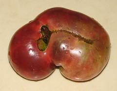 Purple Cherokee tomato (Harris Graber) Tags: tomato gothamist heirloomtomato purplecherokee