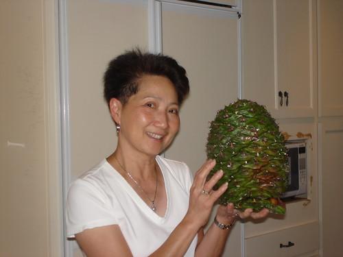 bunya bunya pine cone