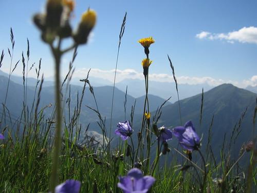 Chamonix - Alpine blomster