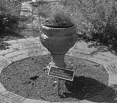 Avalon_Memorial_Urn_8_IMG_2194 9-6-2006 3-14-07 PM 9-6-2006 3-14-07 PM (Mary Bull) Tags: white black urn