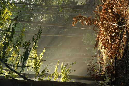 Lambdown Hill... dusty, early sunlight