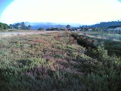 20060910T183434 (earthasa) Tags: sanfrancisco california park sunset fog bay sundown dusk thick rolling millvalley marshes rollingin ctxflickr