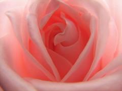 Rose Interior - by audreyjm529