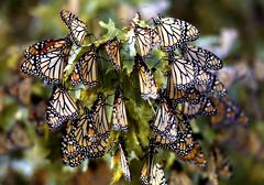 gathering wings - by Steve took it