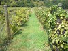 Falconers Vineyard