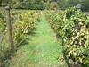 Falconers Vineyard