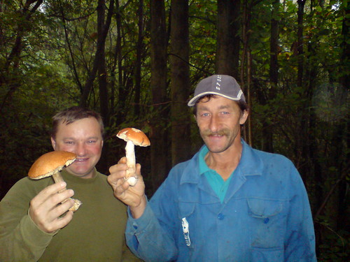 Polish Mushroom Hunters - Picking Mushrooms