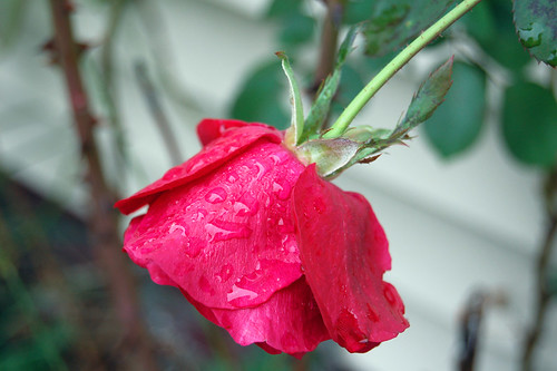 Raindrops on Roses | You know that song from the sound of mu