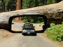 Sequoia National Park (ribizlifozelek) Tags: road ca tunnel saab sequoia sequoianationalpark saab900 top20travel frhwofavs