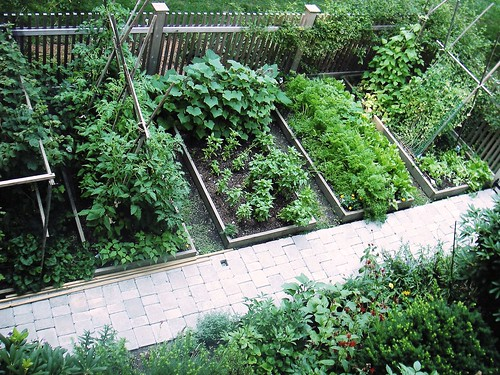 Skippy's Vegetable Garden