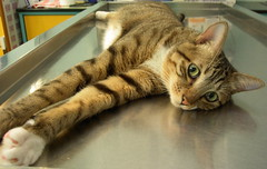 EPSN8455_1 (jacky elin) Tags: cats brown cat mix tabby jacky