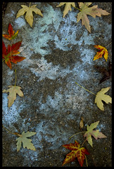 Chalk Leaves (jnhkrawczyk) Tags: blue autumn shadow red orange fall leaves yellow kids children chalk leaf artwork play cement ephemera sidewalk serendipity leftover lingering jillnhamiltonkrawczyk
