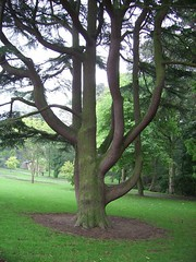 Roundhay Park (yorksgalSue pain is a pain) Tags: pink brown tree green grass leaves yorkshire leeds bark westyorkshire