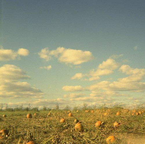 Duaflex: Alber Orchard
