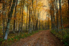 autumn trail (snapstill studio) Tags: road autumn color fall leaves michigan country trail martinmcreynolds