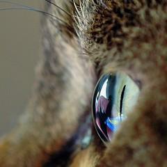 Marble (Buntekuh) Tags: cats pets eye topf25 animals topf50 bravo gatos eyeball topf125 topf150 topf100 esp katzen topf200 buntekuh fiete 2000views topv1000 beautyisintheeye 3000views 500viewsand50favourites magicdonkey 1800views 1500views 3500views abigfave shieldofexcellence tamron180macro bestofcats catsdomestic1000 macrocateye world100f