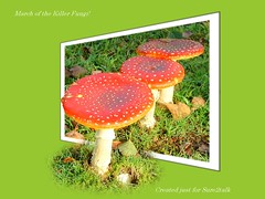 March of the Killer Fungi (Missy2004) Tags: tag3 taggedout fly tag2 tag1 fungi agaric oob btlm