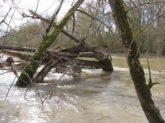 IMG_0931 (NICOB-) Tags: loire hiver nièvre bourgogne cher fleuve lumière arbres eau boisflottés embacles villechaud bannay mousse crue