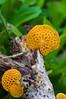 Fungi (ArneKaiser) Tags: 3macroring takebackthegarden dof f56 fungi garden macro smcpentaxm50mmf14