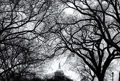 A tangled web (8230This&That) Tags: uscapitol tangledweb trees blackandwhite bw capitoldome washingtondc dc nationalmall