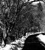 path (PHOTOPHANATIC1) Tags: path