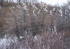 Sky Forest, California (ChrisGoldNY) Tags: chrisgoldphoto chrisgoldny chrisgoldberg forsale licensing bookcovers bookcover albumcover albumcovers sonyalpha sonya7rii sonyimages sony california socal cali lakearrowhead snow winter frozen freeze