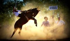 Rafa e Augusto Cardoso (Eduardo Amorim) Tags: gaúcho gaúchos gaucho gauchos cavalos caballos horses chevaux cavalli pferde caballo horse cheval cavallo pferd crioulo criollo crioulos criollos cavalocrioulo cavaloscrioulos caballocriollo caballoscriollos pampa campanha fronteira uruguaiana riograndedosul brésil brasil sudamérica südamerika suramérica américadosul southamerica amériquedusud americameridionale américadelsur americadelsud cavalo 馬 حصان 马 лошадь ঘোড়া 말 סוס ม้า häst hest hevonen άλογο brazil eduardoamorim jineteada gineteada