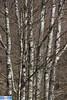 IMG_3469 (superingo78) Tags: frühling eifel monschau natur