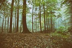 DSC_0069 - Kopie (Jens Scheider) Tags: buchenwald grumsin brandenburg uckermark