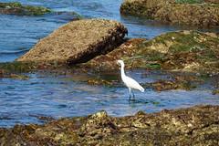 DSC06788 (joeginder) Tags: jrglongbeach lunadabay palosverdes californa pacific coast hiking ocean