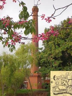 Smooth. Silk Floss Tree, Ceiba speciosa, and Chimney, Cultural Centre Bastión del Carmen, Colonia del Sacramento, Uruguay