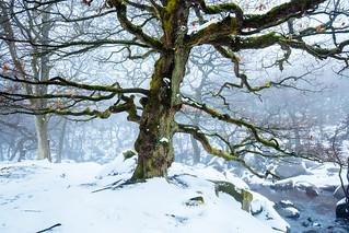 Winter's Tale II